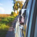 Hoe kies je een autostoel voor jouw kleine hond?