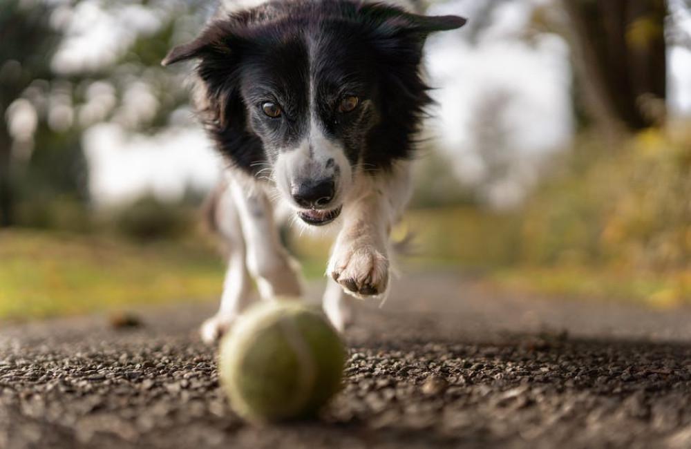 Waar moet je op letten als je een hond neemt?