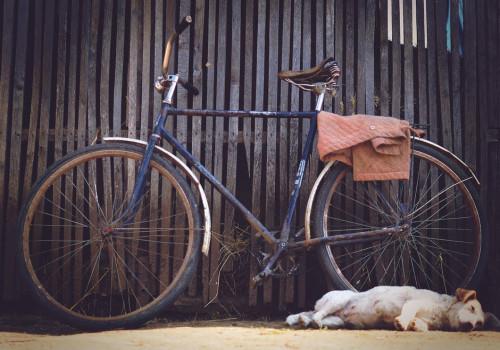 Waar moet ik op letten als ik ga fietsen met mijn hond?