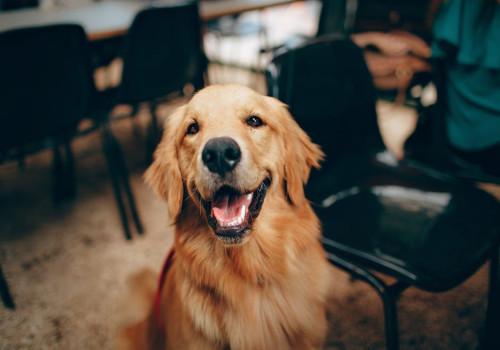 Goedkoop op vakantie met de hond