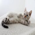 Welke geur schrikt een kat af?