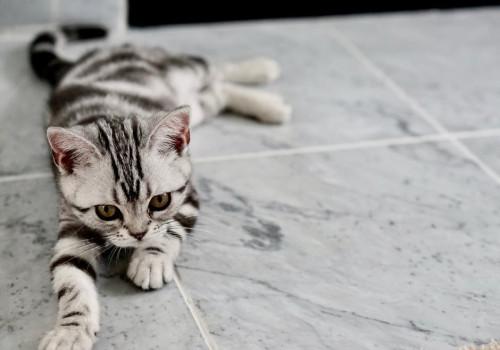 Welke vitamines en voedingsstoffen heeft een kat nodig?