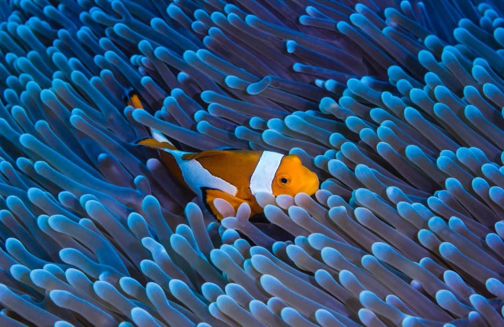 Wat is het verschil tussen een Nano aquarium en een gewoon aquarium?