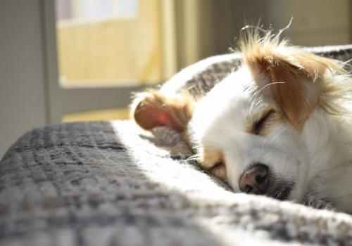 Hoe geef je jouw hond een warm thuis?